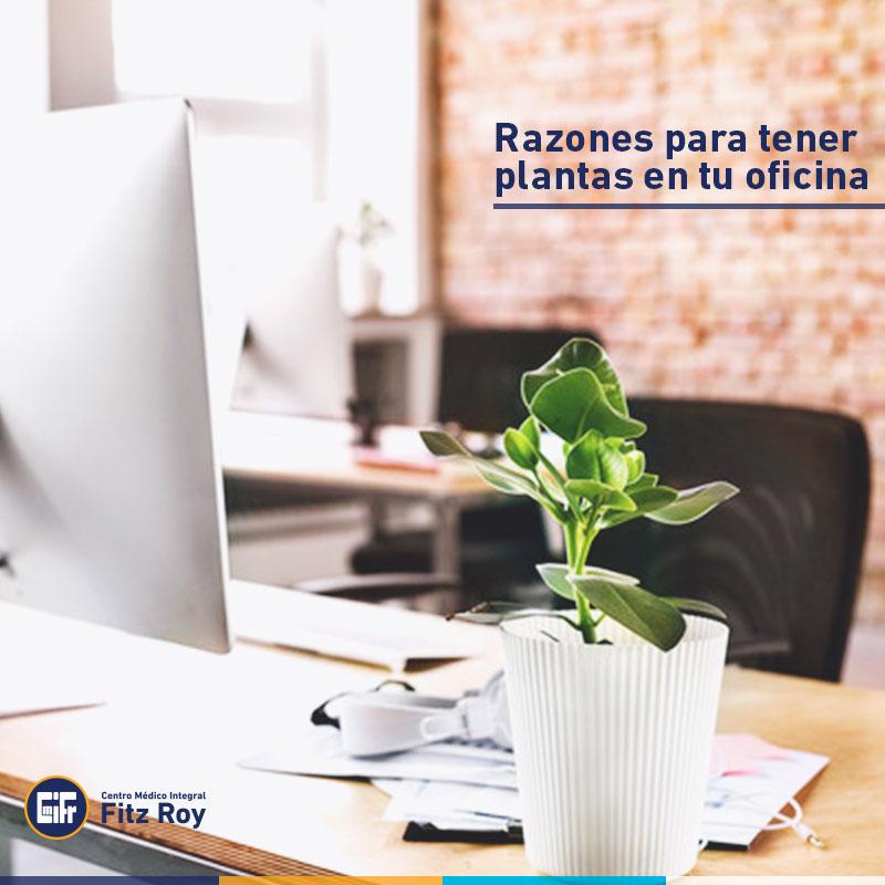 Razones para tener plantas en tu oficina