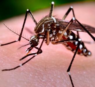Dengue: ¿Cómo  podemos prevenirlo?