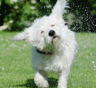 ¡Nuestras mascotas también sufren golpes de calor!